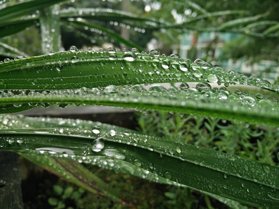 shiny water droplets on leaves