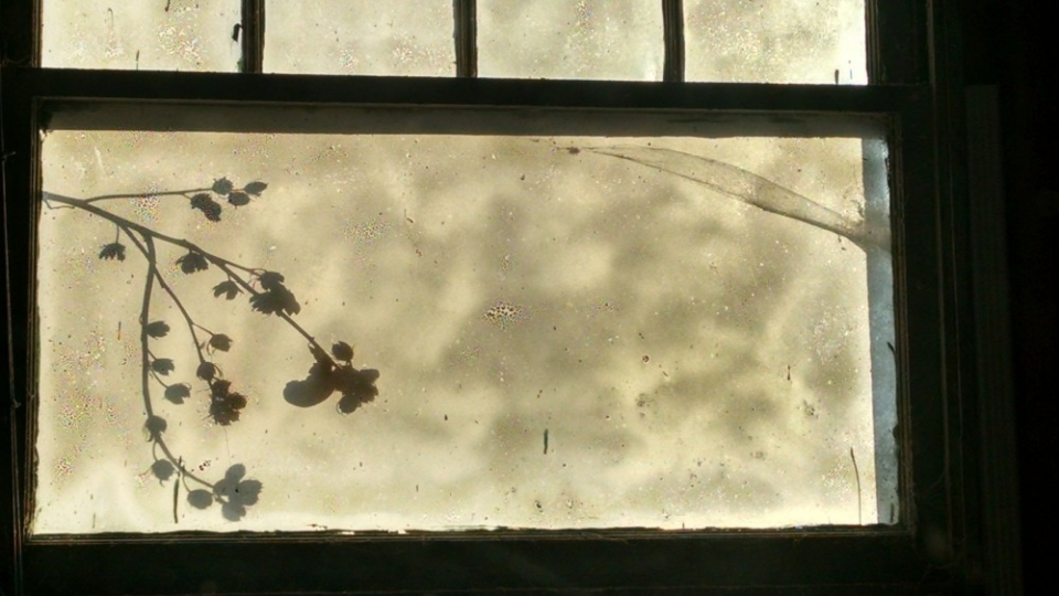 old window with a backdrop of hibiscus plant shadow
