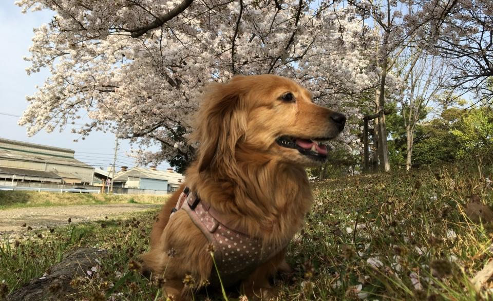 Nozomi Enjoying a Break