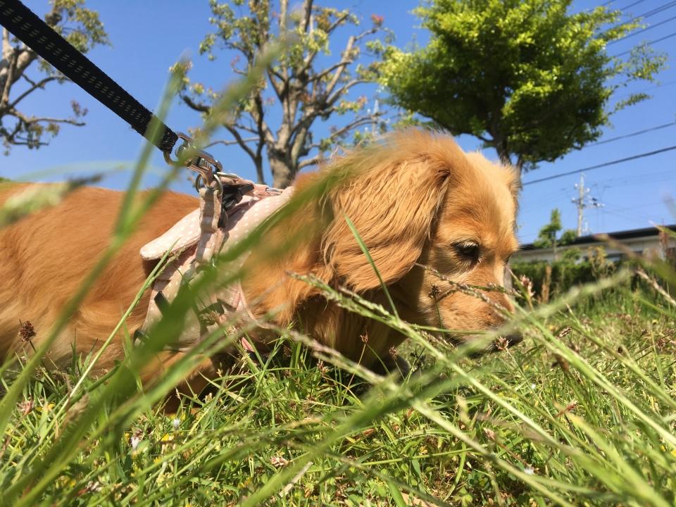 Nozomi Exploring the Grass