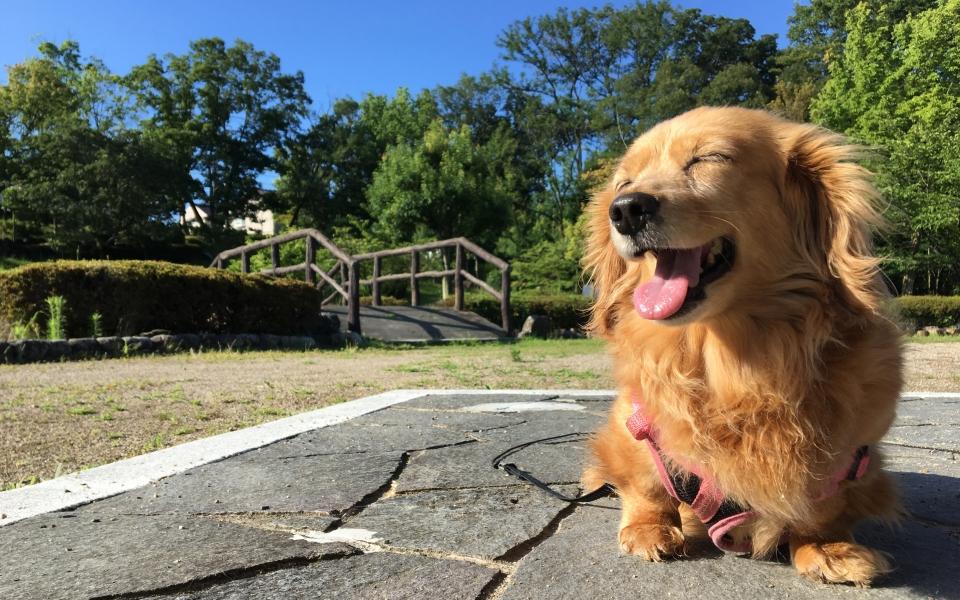 Nozomi Enjoying the Sun