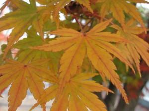 秋のあき…
