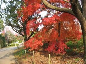 Lovely Leaves of Red