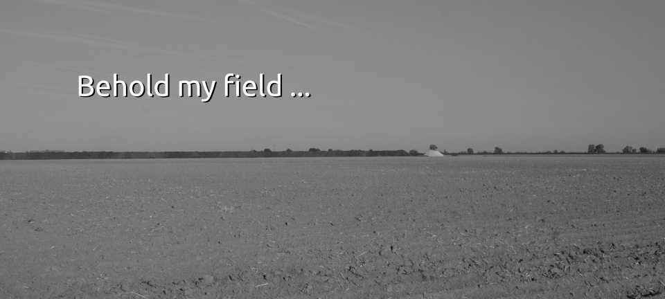 Behold My Field …