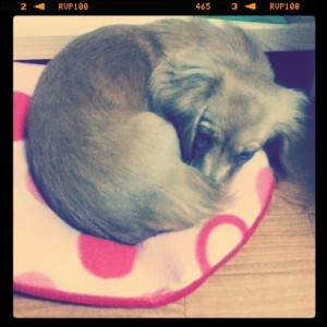 Sleepy Nozomi (Instagram)