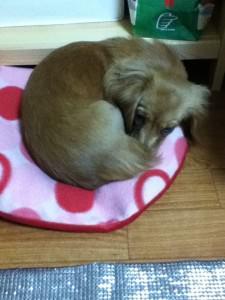 Sleepy Nozomi (Original)
